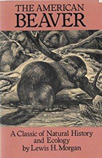 American Beaver - Landscape