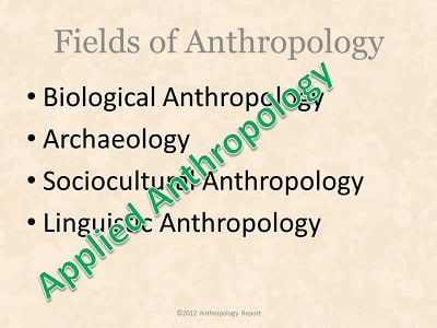 What is Anthropology 2013