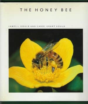 The Honey Bee - Goulds - Journey